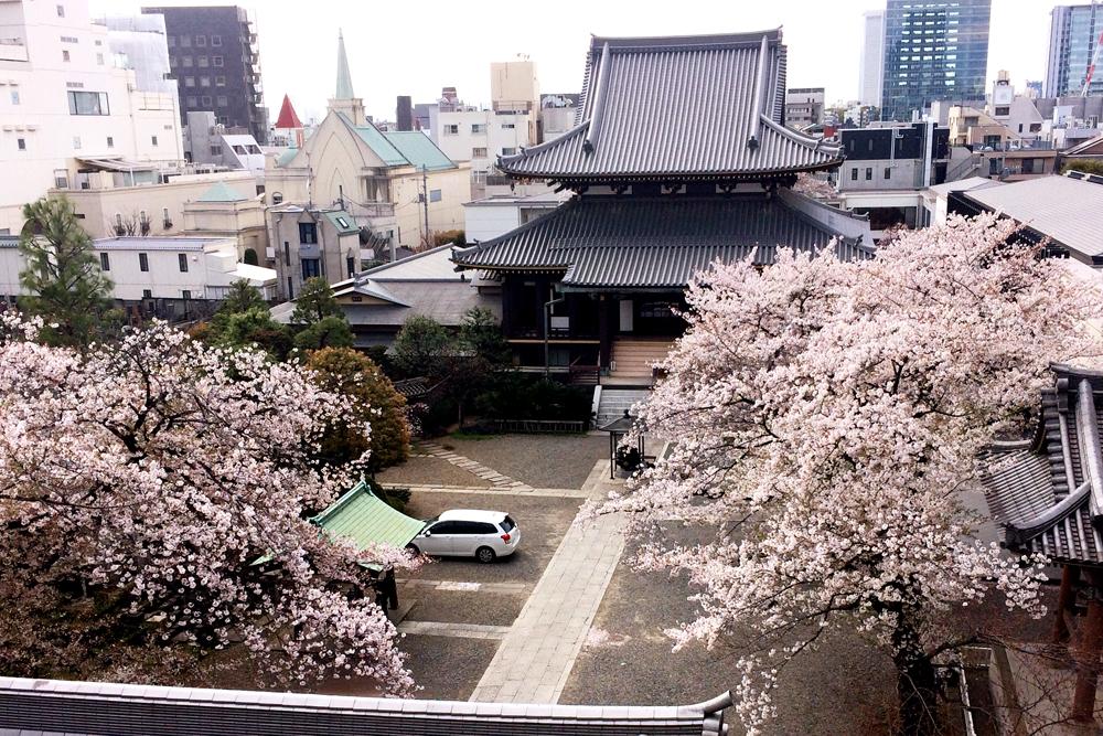 表参道駅付近にある きれいな桜が見れる場所
